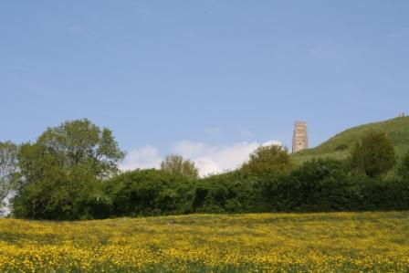 Buttercups and the Tor